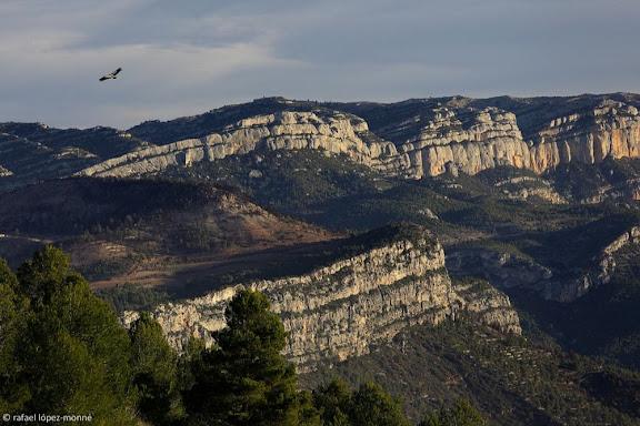 El Montsant vist des de la serra de la Figuera.Silueta d'un voltor.La Figuera, Priorat, Tarragona