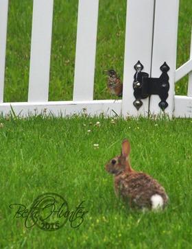 robin-bunny