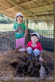 Pluke Rak Farm-03275