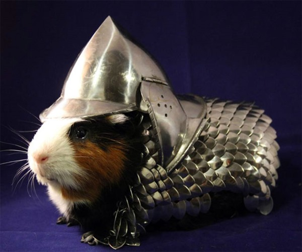 handmade-guinea-pig-armor-8201