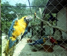 1981.06.24-018.01 perroquets