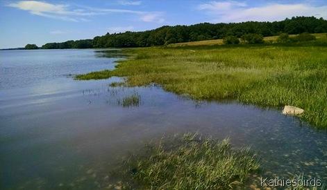 15. 7-3-15 Wharton Point high tide