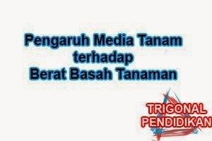 Pengaruh Media Tanam terhadap Berat Basah Tanaman Kangkung