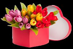tulip clipart (29)