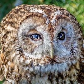 by Steven Morrison - Animals Birds