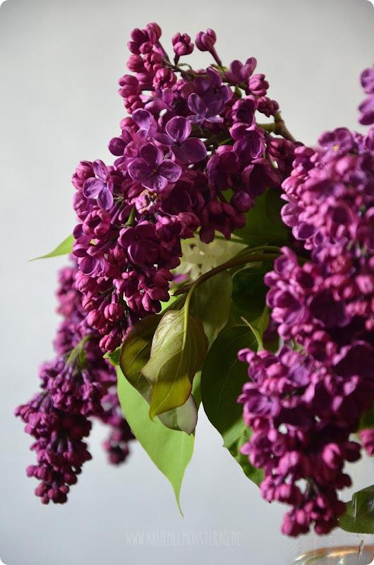 Flieder (01) in lila, flieder und weiß aus dem Garten