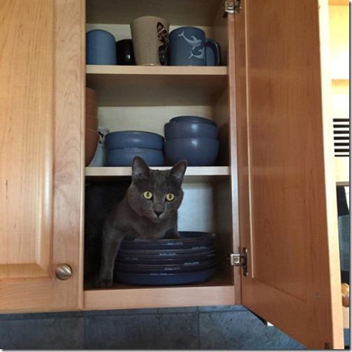 gatos sitios para esconderse (5)