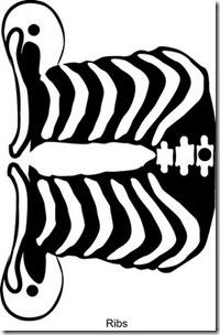 esqueleto para armar buscoimagenes com (2)