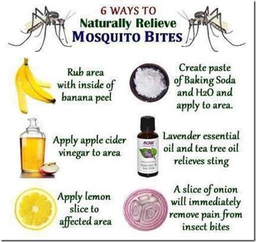 MosquitoBites