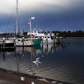 Lakes Entrance Harbour by Sarah Harding - Novices Only Landscapes ( outdoors, boats, novices only, seascape, birds )