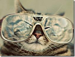 gatos divertidos buscoimagenes (3)