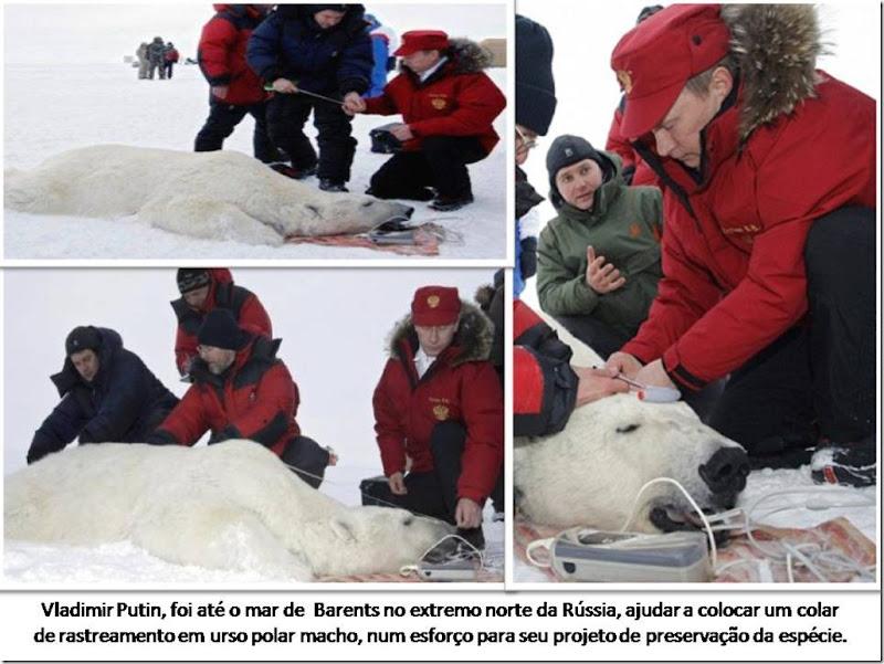 putin-polarbear