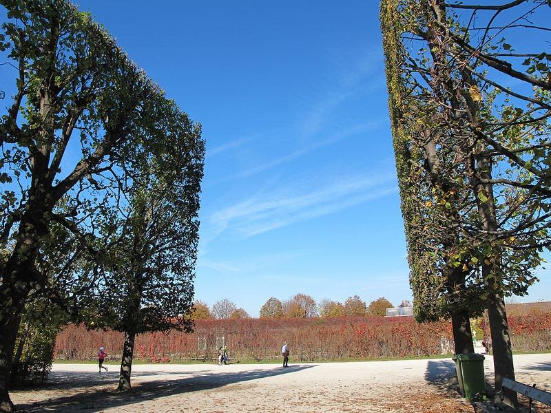 schönbrunn-palace-trimmed-trees-9