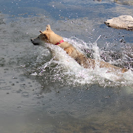 Ball Chasing by Diane Garcia - Animals - Dogs Playing ( playing, dog, water,  )