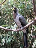 A pretty bird at the Nashville Zoo 09032011a