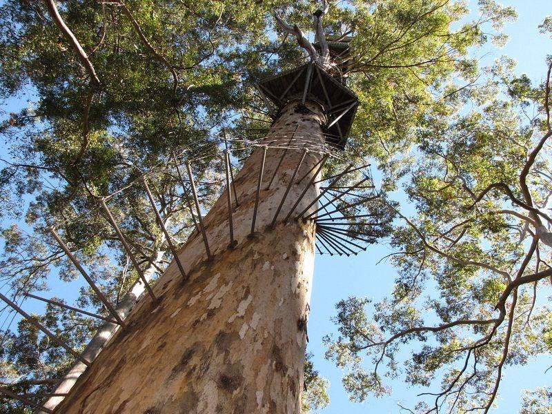dave-evans-bicentennial-tree-3