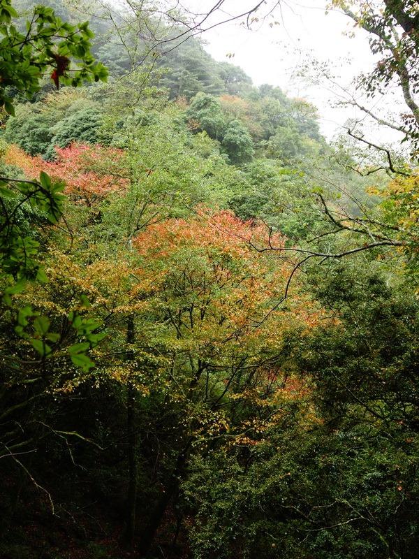 2013_1126-1129 鹿林山-1_200