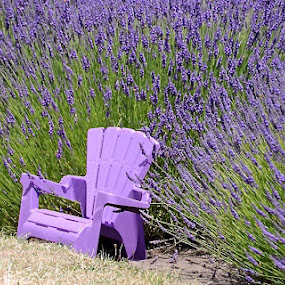 Lavender Chair by Denise Armstrong - Artistic Objects Furniture ( washington,  )