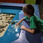 Carolina Aquarium - 06072013 - 32