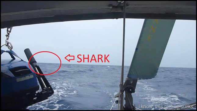Terrible pic of the shark that bit our tow gen
