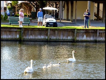 11- Pond Fishing and the Swan Family