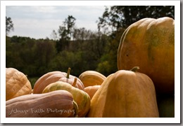October 16, 2015 - Native pumpkins are grown each year, originating from generations past. Photo by Faith Davis