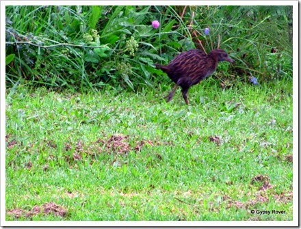 Weka at our POP in Opotiki.