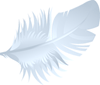 Footer-Feather