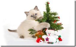 77- gatos navidad (2)- buscoimagenes