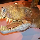Houston Museum of Natural Science - 116_2694.JPG