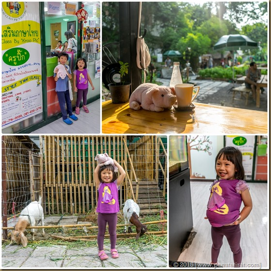 Positive Pig Story 2