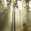 Каталог фотопечати » Forest