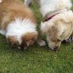 Welpe Cathy mit Stella November 2011 036.jpg