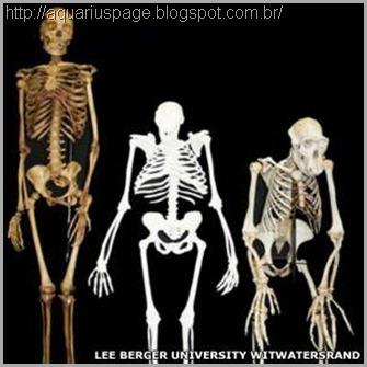 esqueleto-evolução-homem-macaco
