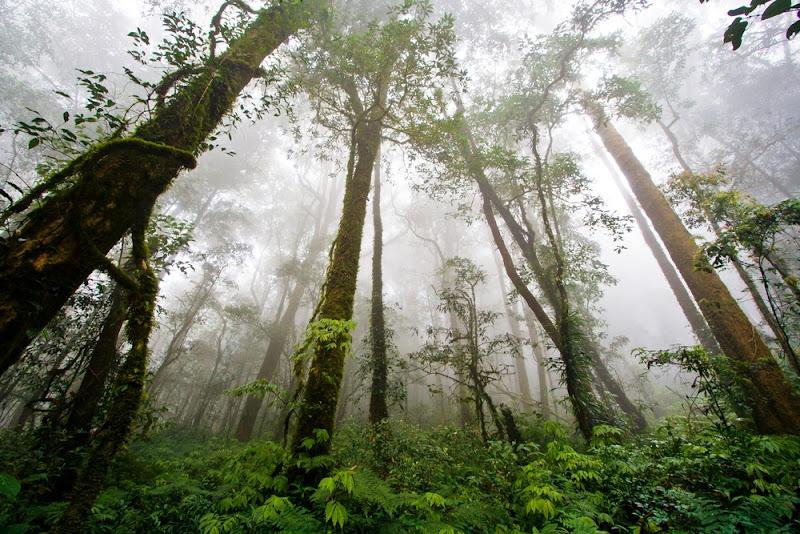 Forêt de Doi Inthanon, Thailande