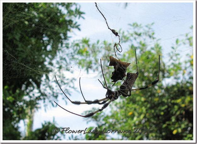 07-15-spider