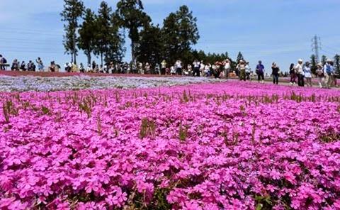 Hitsujiyama parque