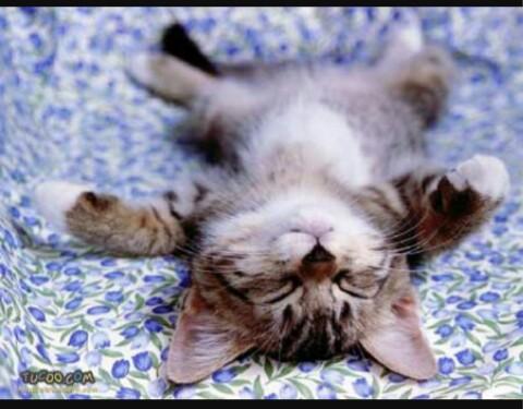 kucing comel, kucing kepenatan, gambar kepenatan, karenah anak anak,