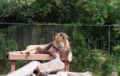 1992.07.07-104.06 lion