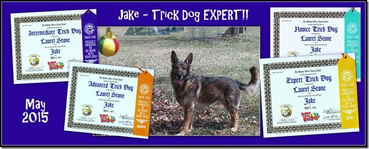 2015.5 Jake Trick Dog Expert