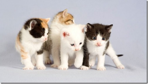 1123cute-cats-wallpapers-background-63