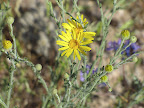Unidentified flower, 4/15
