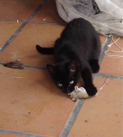 la gata-cazadora. y (claro) los gatitos