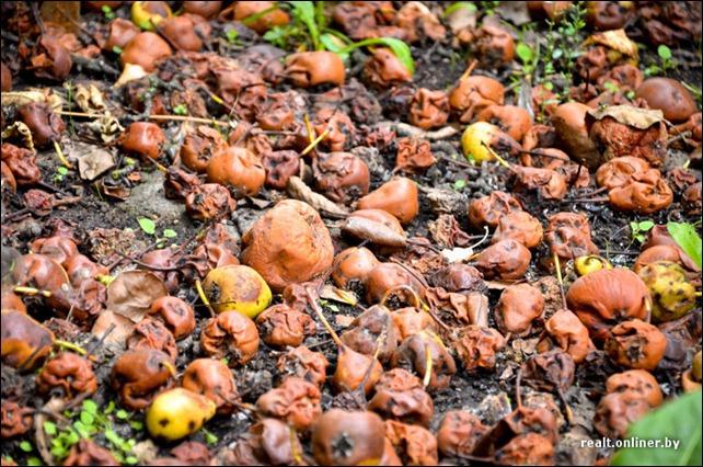 ...Ставлення до початків плодів – дуже дбайливе, майже сакральне.