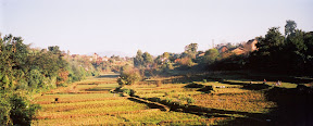 Some rice fields in the middle of Antsirabe.
