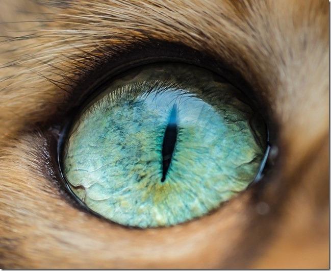 Cats Eyes11
