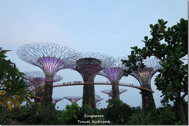 新加坡超級樹燈光秀 (11)