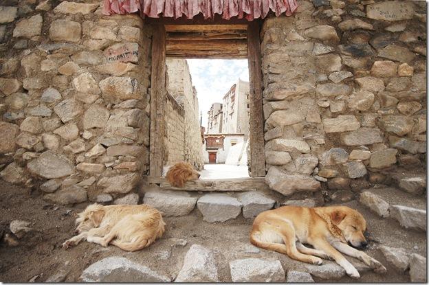 Ladakh43