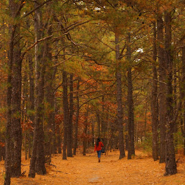 Little Red Riding Hood by Magdalena Sitko - People Street & Candids ( red, riding, woman, fall, littleredridinghood, trees, little, lone, forest, young, lonely, hood, tall )