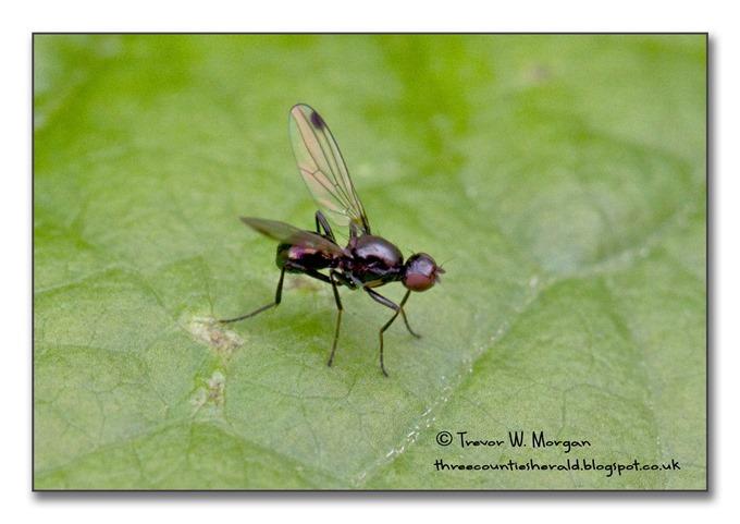 Bug Affair 4 Smallest  Ensign